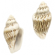 Shell bead specials whelks Beige-Brown